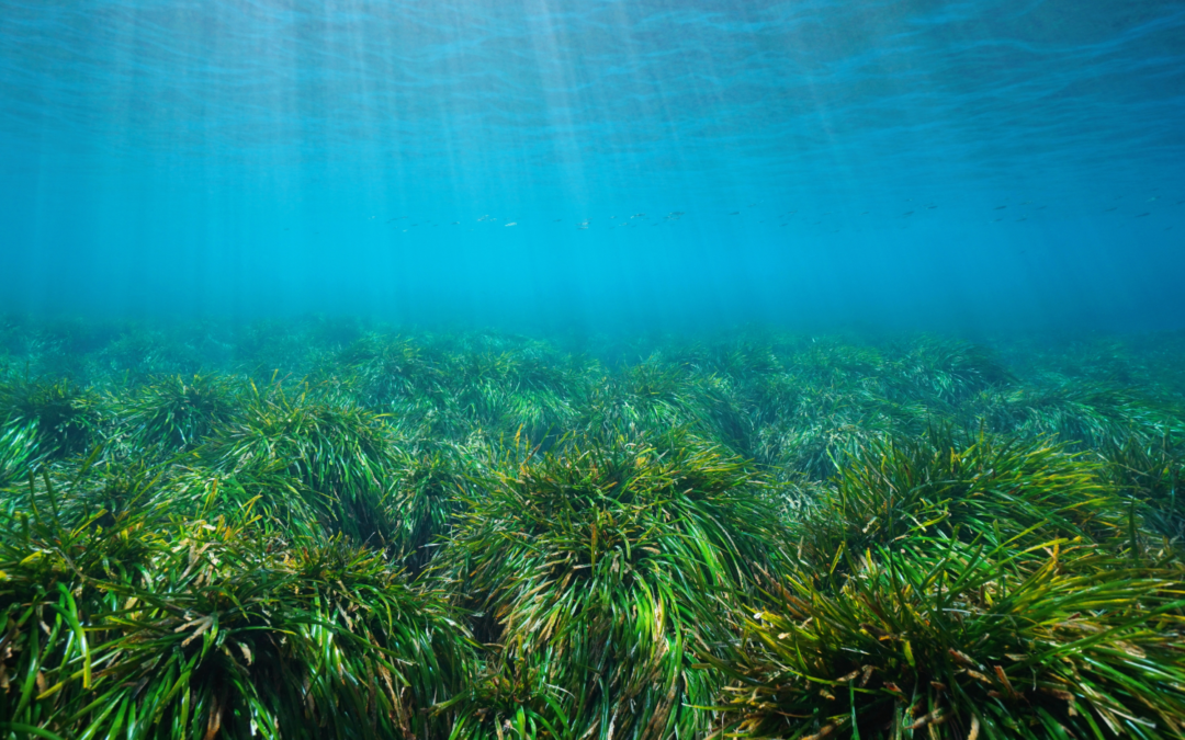 New French Anchoring Regulations & Posidonia Seagrass